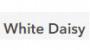 White Daisy yorumları